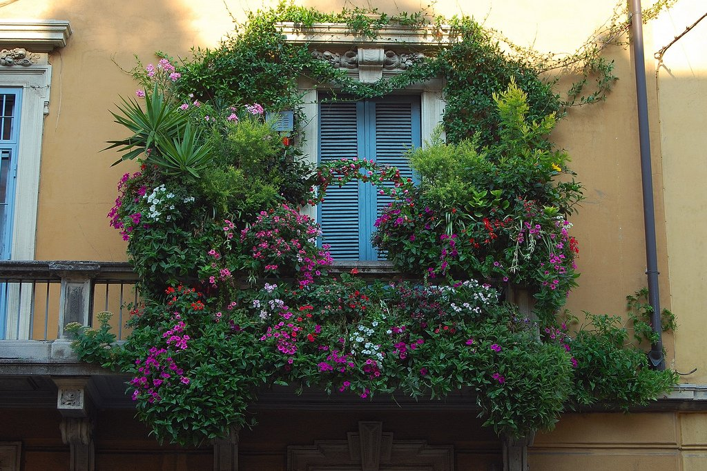 Балкон цветы