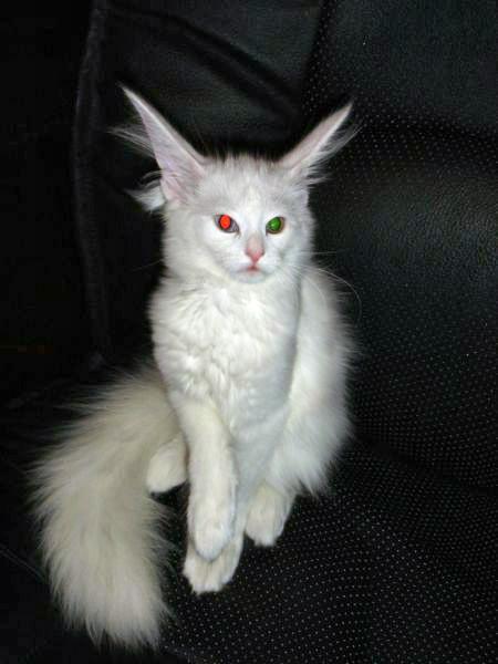 http://tomatoz.ru/uploads/posts/2010-10/1286965778_1038.jpg