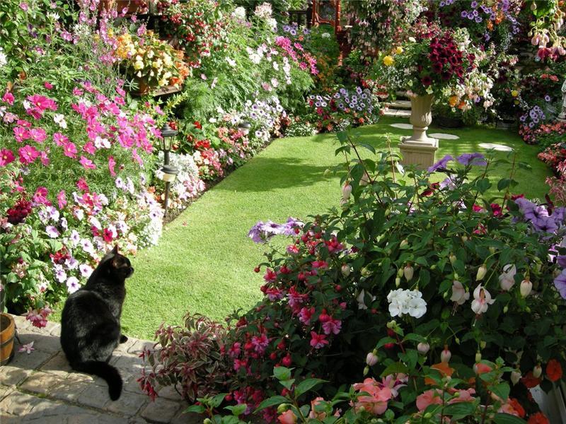 Райский сад своими руками - Lumalive