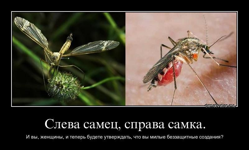 Mosquito female vs male