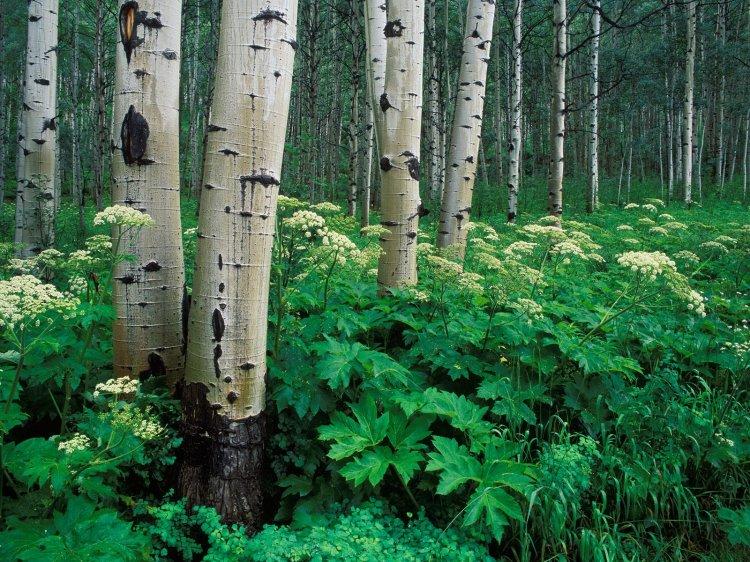 Природа → природа во всей красе