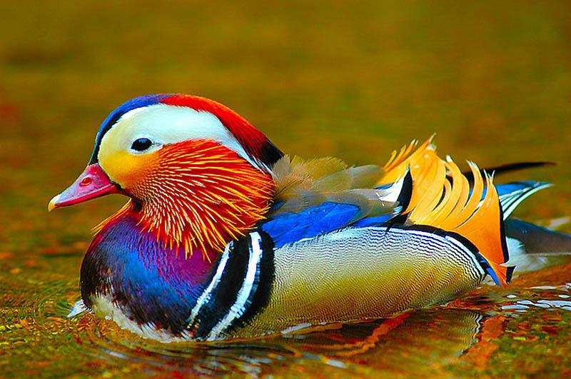 привод автосцепки фото картинки красивых птиц помощи тормоза