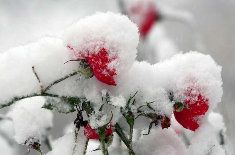 http://tomatoz.ru/uploads/posts/2012-12/thumbs/1355422502_742_zima-13-13.jpg