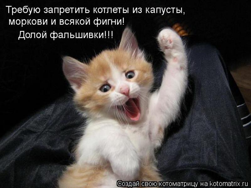 http://tomatoz.ru/uploads/posts/2013-02/1360508298_kotomatritsa_d_resize.jpg