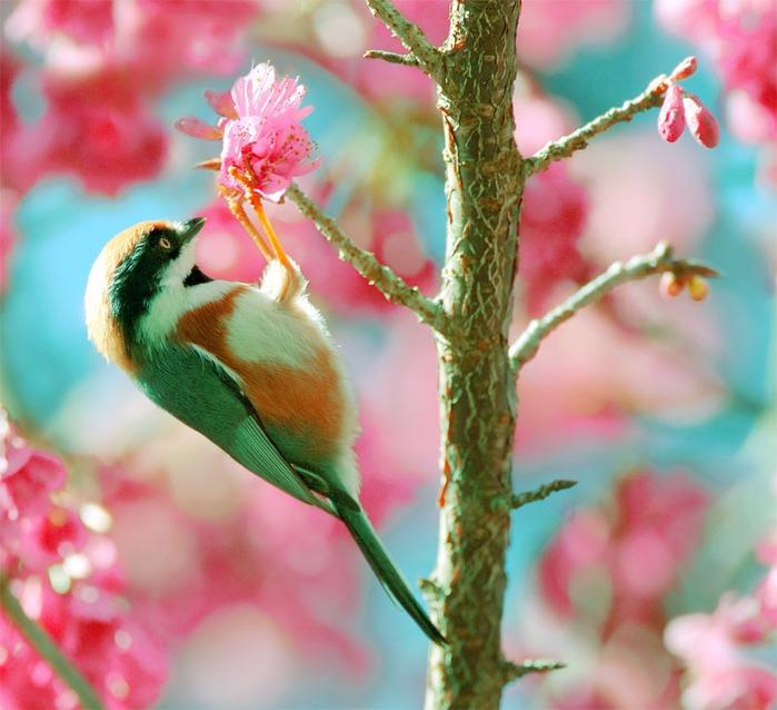 Птичий мир
